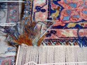 Detail Teppichschaden Reparatur